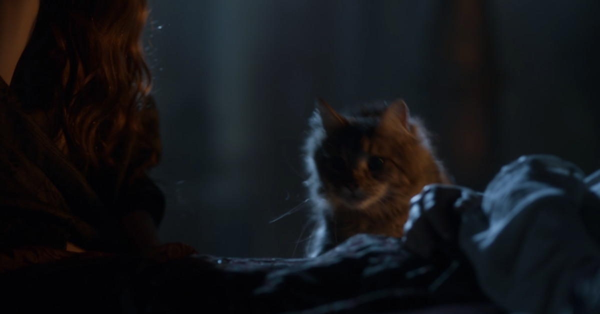 Ser Pounce, Game of Thrones' beloved fan-favorite cat, was killed off-screen